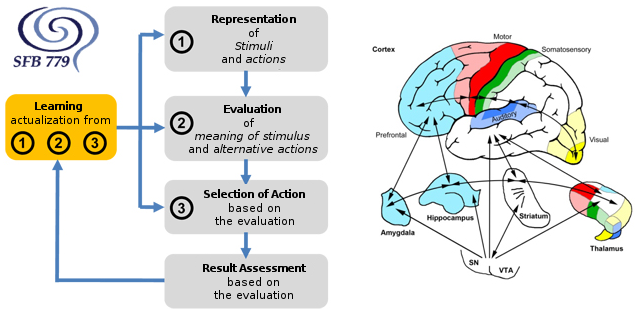 Figures detailing motivation processes and localizations in the brain