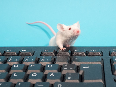 A mouse on a keyboard